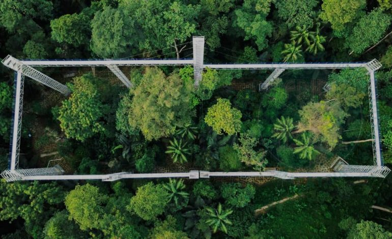 Forest Research Institute Malaysia, the Beautiful Nature